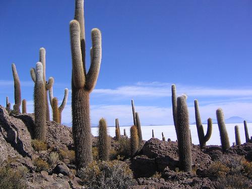 Isla de los Pescadores, Bolivia, photo by Phil Whitehouse