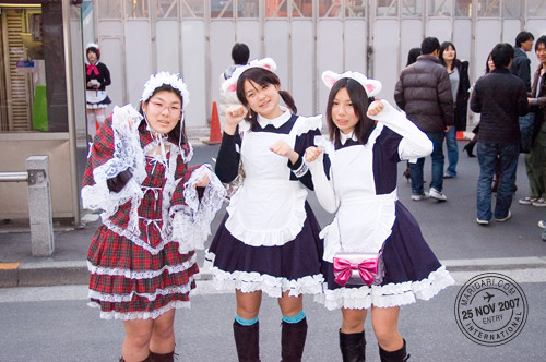 Akihabara Cosplay Nekomimi Cats