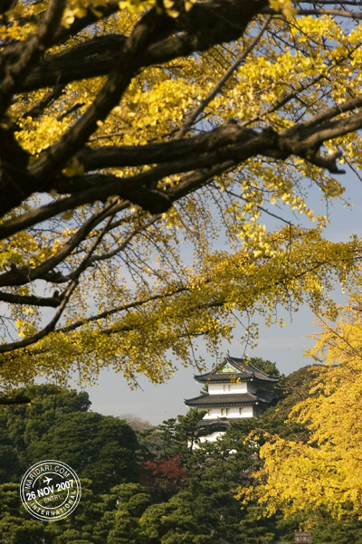 Imperial Palace framed by yellow ginkgo leaves