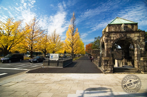 Ginkgo Trees in Autumn near Tokyo Station and Imperial Palace